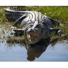 Priceless - Le crocodile du Bouregreg
