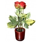Vase rond avec rose rouge