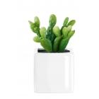Succulentes ASA grand model