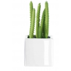 Succulentes ASA petit  model