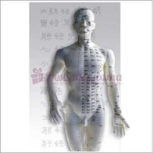 Livret Théorie Acupuncture