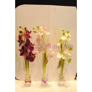 Orchidées Dans Un Vase - Daniele Roche