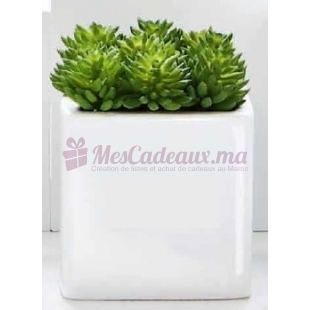 Succulentes Grand modele - ASA Selection