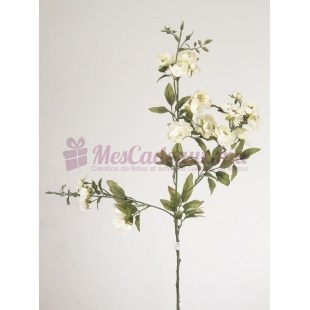 Blush Noisettia Rose Cream (2 Pièces)