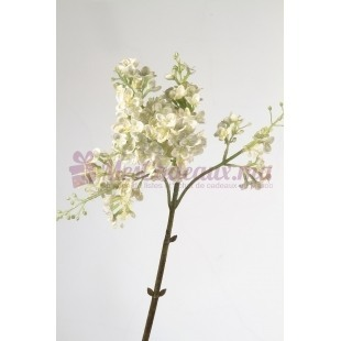 Lilac Cream (2 Pièces)