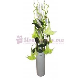Datura Dans Un Vase Opaque Blanc - Daniel Roche